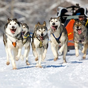 Activités d'hiver – Traîneau à chiens