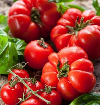 refrigerer-les-tomates