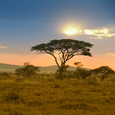 Le Parc national du Serengeti est le 2e plus grand parc animalier d'Afrique. Photo: Guenter Guni/Getty Images