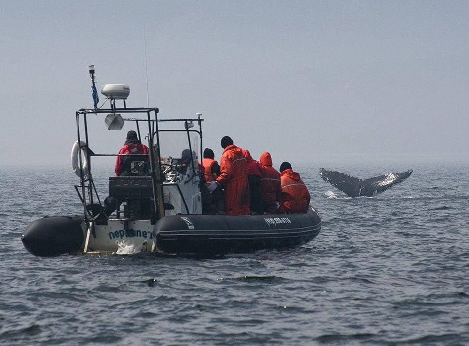 Suivre la route des baleines