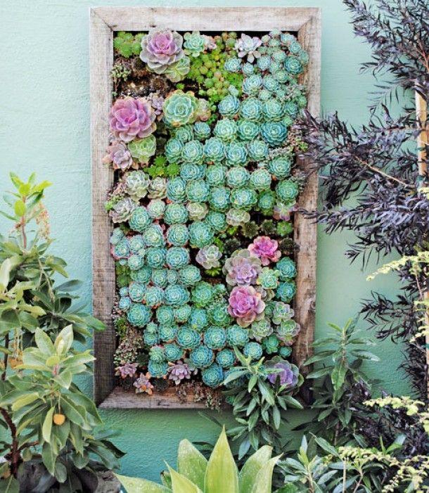 tableau-mur-succulente-marseille-paysagiste