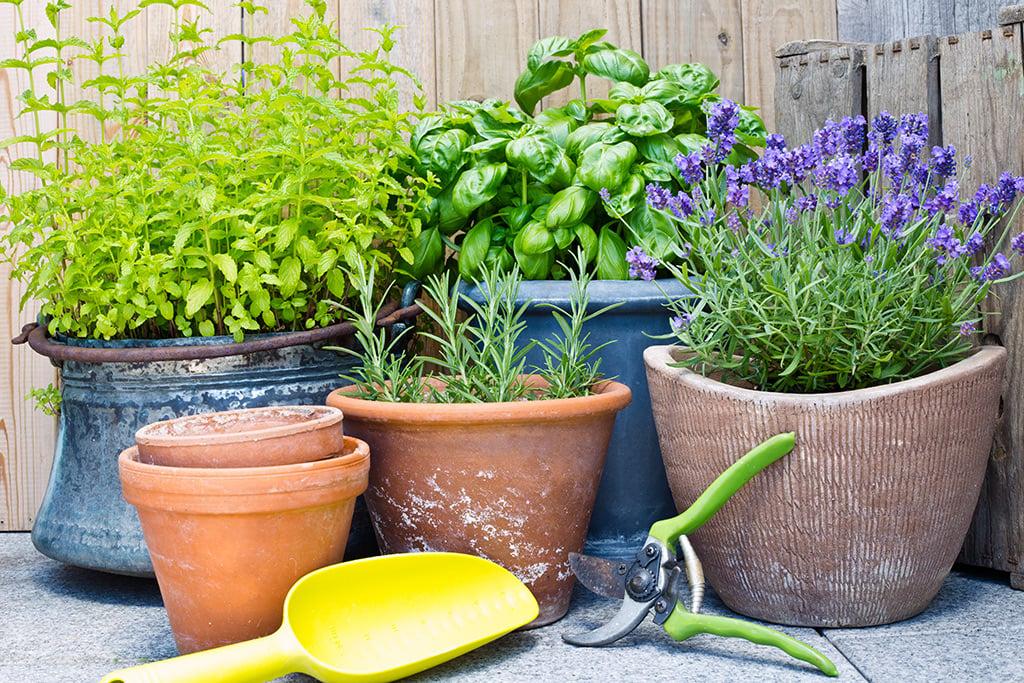 comment cultiver les fines herbes au balcon ch telaine. Black Bedroom Furniture Sets. Home Design Ideas